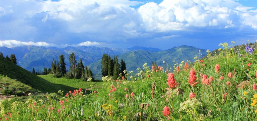 summer colorado wildflowers