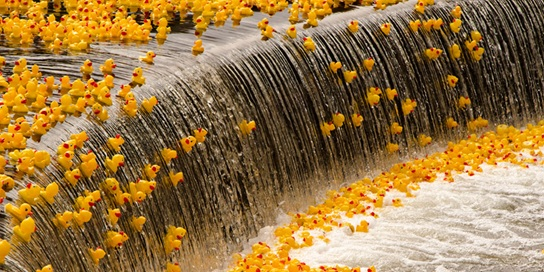 The Great Rubber Duck Race in Breckenridge is Today! - Summit Express